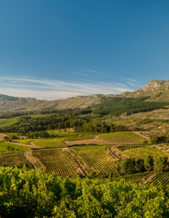 Green Vineyard and Farm near hills and mountains in Klein Constantia